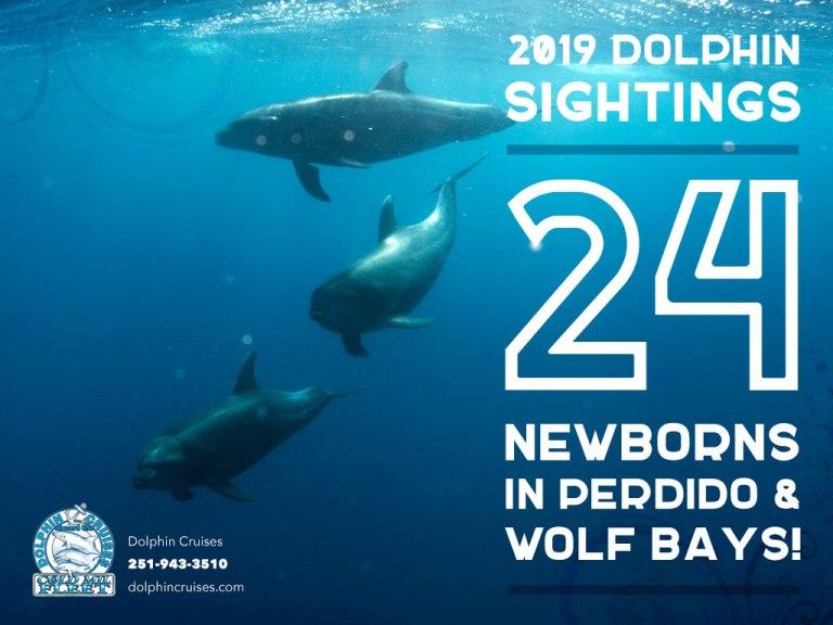 Newborn Dolphin [Infographic]
